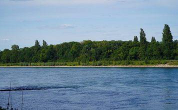 Symbolbild Rhein (Foto: Holger Knecht)