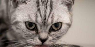 Symbolbild Katze (Foto: Pixabay/birgl)