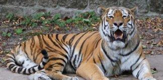 2020 Zoo Landau (Foto: Holger Knecht)