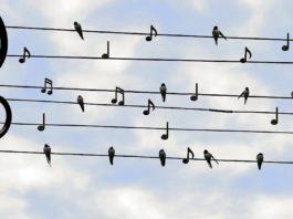 Symbolbild Musik Noten (Foto: Pixabay/Dieter_G)