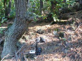 Hier werden Temperatur und Lichtintensität im Wald gemessen. (Foto: Pfalzmuseum für Naturkunde)