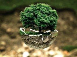 Symbolbild Baum Wald Natur (Foto: Pixabay/Bela Geletneky)