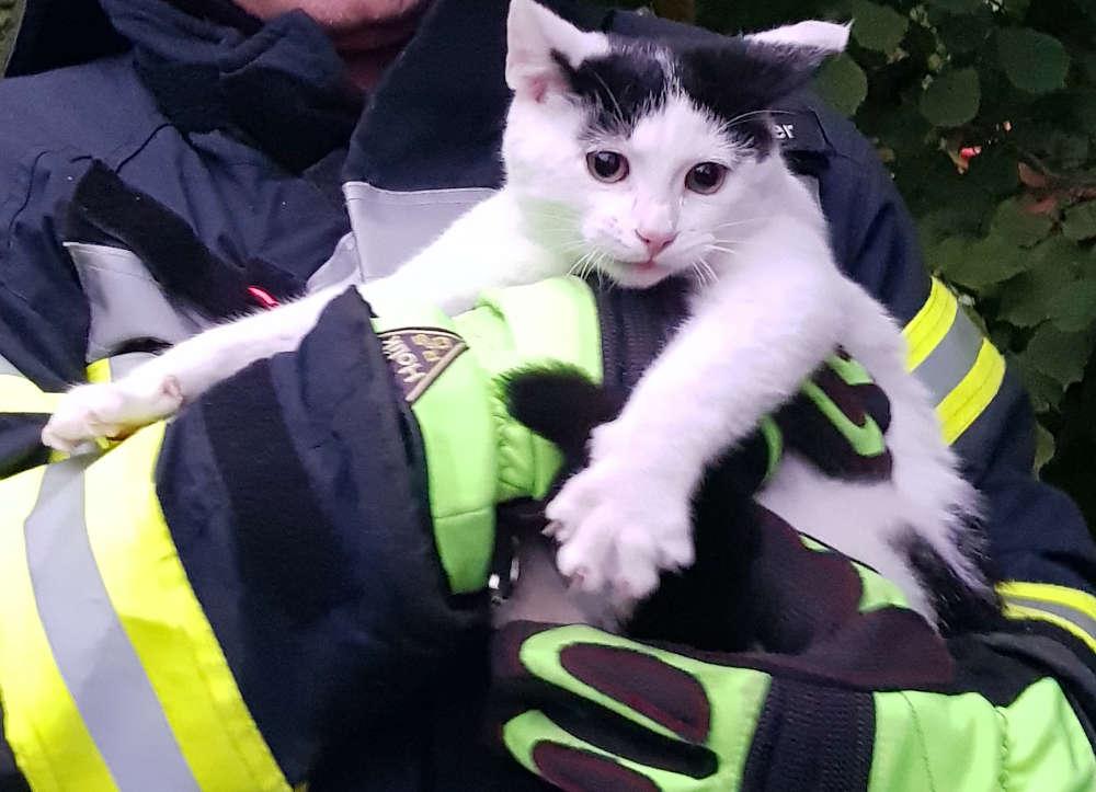 Die Katze nach der Rettung (Foto: Feuerwehr Neustadt)