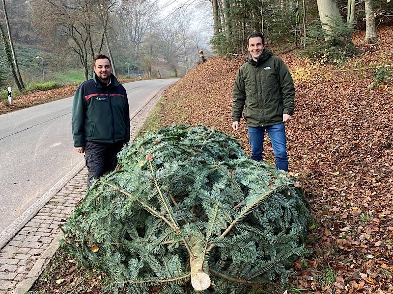 Weihnachtsbaum (Foto: VGV Annweiler)