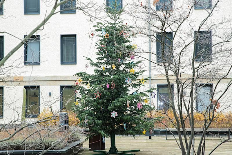 Weihnachtsbaum aus Speyer (Foto: Landtag Rheinland-Pfalz)