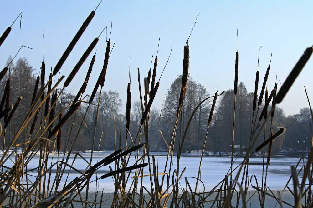 Kutzerweiher im Winter (Foto: Stadtpark Mannheim gGmbH)