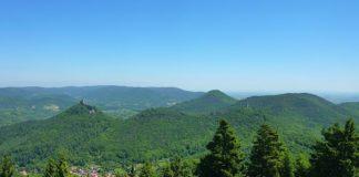 Größtes zusammenhängendes Waldgebiet Deutschlands und Modellregion mit besonderen Aufgaben: Beim Team des Biosphärenreservats Pfälzerwald kann ein FÖJ geleistet werden (Foto: Biosphärenreservat/Yannick Baumann)