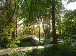 Herzogenriedpark (Foto: Stadtpark Mannheim gGmbH)