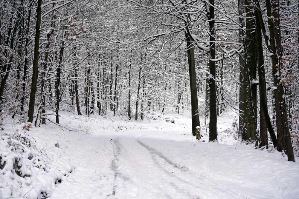 Symbolbild Schnee Wald (Foto: Holger Knecht)