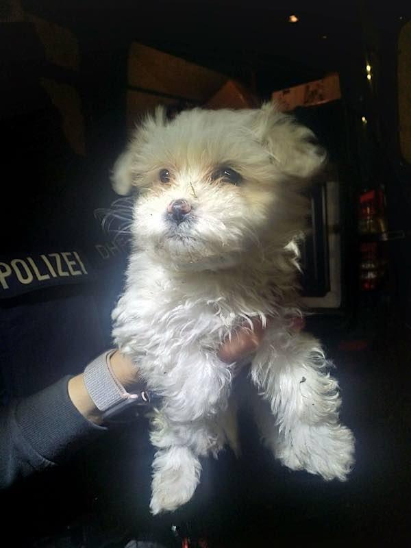Aufgefundener Hund (Foto: Polizei RLP)