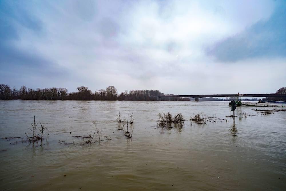 Der Rhein bei Speyer am Sonntag, 31.01.2021 (Foto: Holger Knecht)