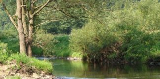 Gewässer (Foto: SGD Süd)