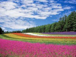 Blumenwiese (Foto: Pixabay/Kohji Asakawa)