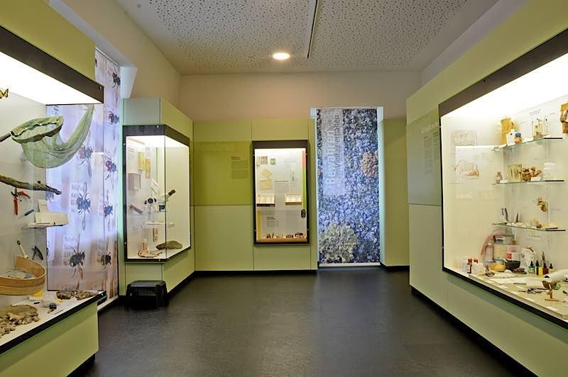 Dauerausstellung – Vielfalt erhalten und bewahren (Foto: Pfalzmuseum für Naturkunde)
