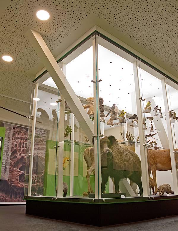 Neu gestaltete Dauerausstellung: Pfälzerwald-Großvitrine (Foto: Pfalzmuseum für Naturkunde)