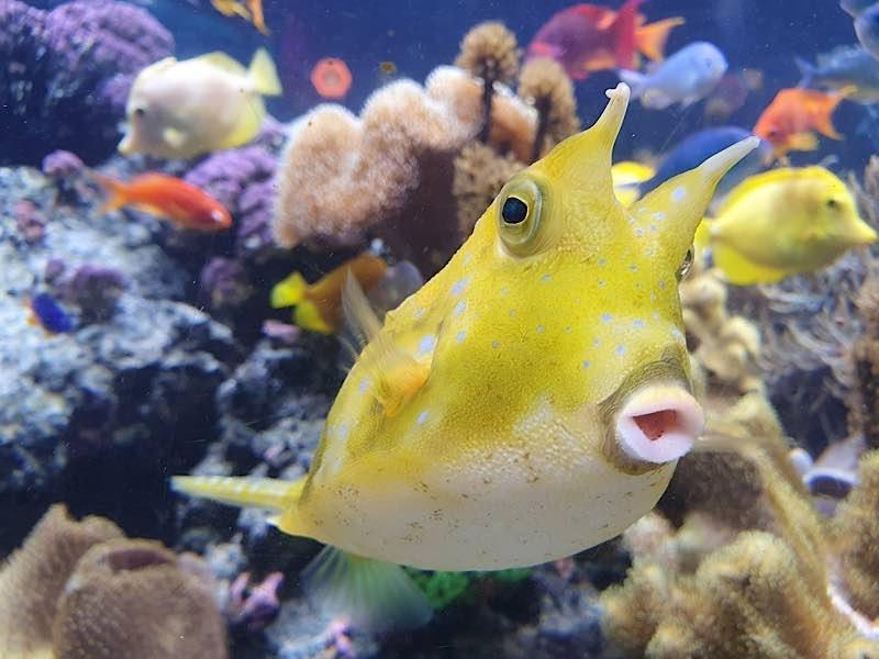 Tropisches Korallenriff (Foto: SeaLife Speyer)