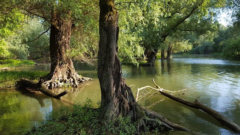 Rheinschlute bei Hochwasser (Foto: A. Wolf)