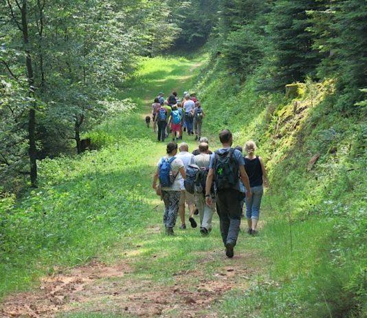 Mit den Biosphären-Guides unterwegs im Biosphärenreservat Pfälzerwald-Nordvogesen (Foto: Biosphärenreservat)