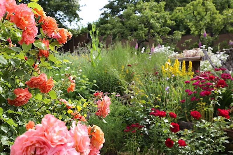 Vielfältig und bunt: Naturgärten tun Mensch und Natur gut (Foto: Biosphärenreservat/Claudia Halfmann)